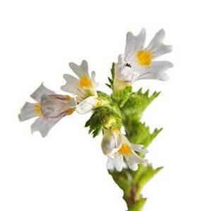 yalmeh eye cream ebright Euphrasia officinalis